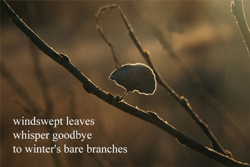 windswept leaves / whisper goodbye / to winter's bare branches --- by Linda Pilarski