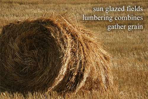 sun glazed fields / lumbering combines / gather grain --- by Linda Pilarski